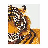 Раскраска по цифрам Тигр (RS-N0001340) 35 х 45 см