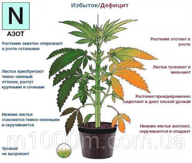 Конопля npk купить в астрахани марихуану