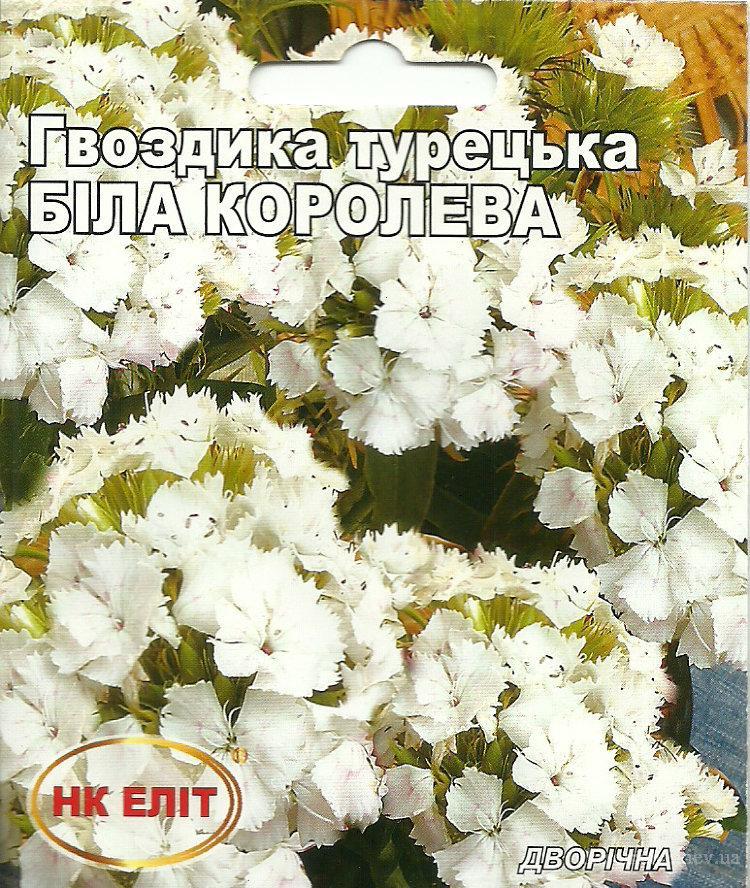 """Гвоздика Турецкая """"Белая королева"""""""