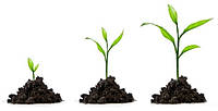 Регуляторы роста и фитогормоны