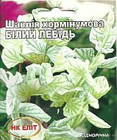 """Шалфей хорминумов """"Белый Лебедь"""""""
