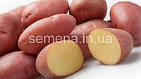 Картофель Кристина  3 кг