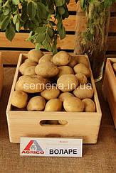 Картофель Воларе  2,5 кг