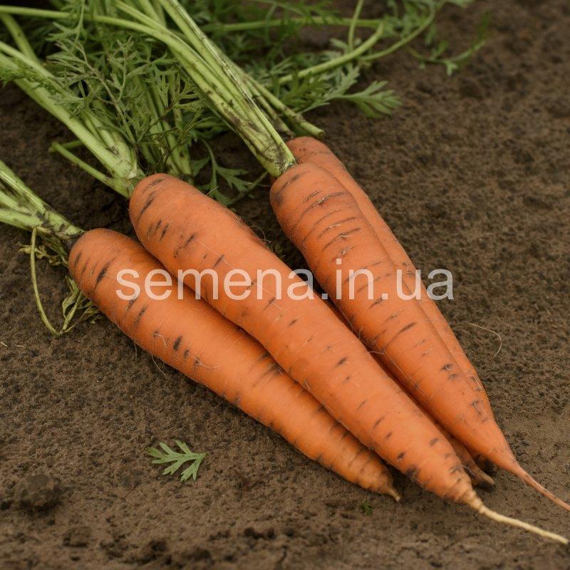 Морковь Сетан F1  100 000 шт