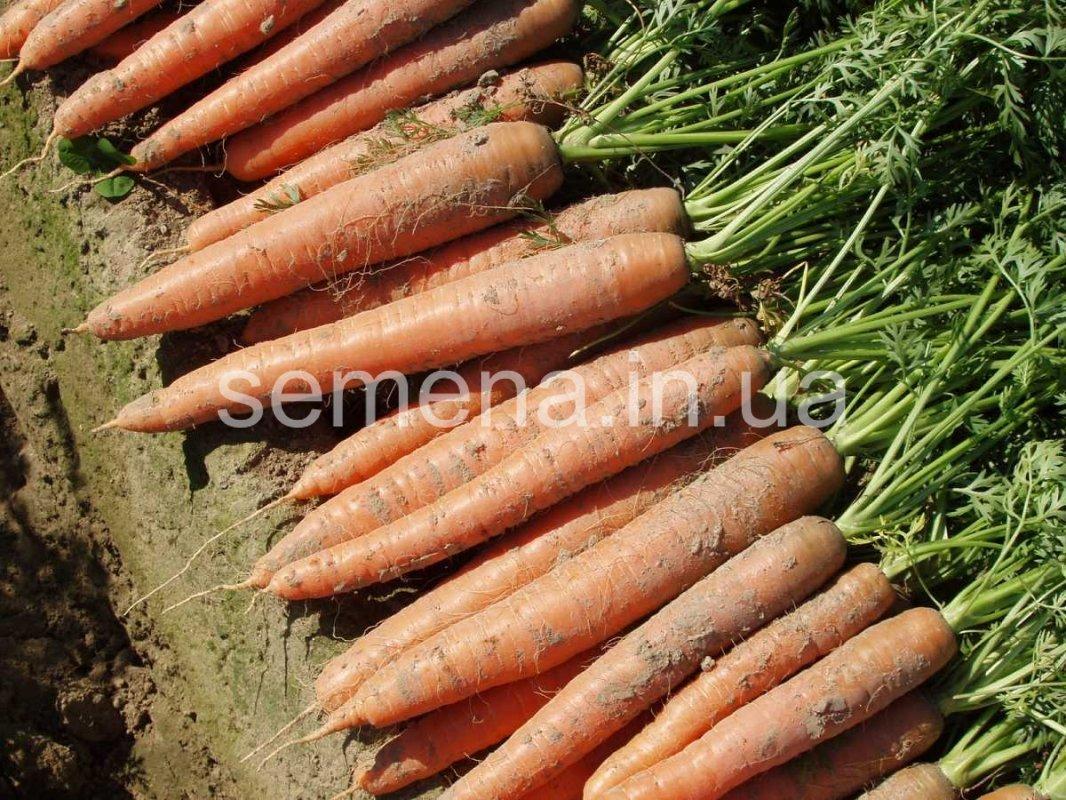 Морковь Бангор F1 (2,0-2,2 мм)  100 000 шт