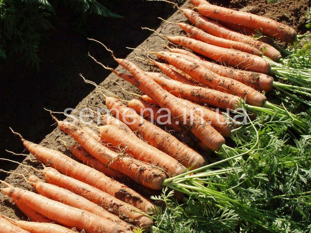 Морковь Наполи F1 (2,2-2,4 мм)  100 000 шт