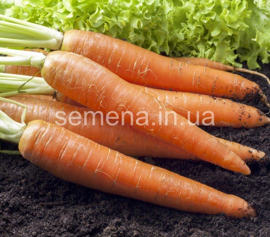 Морковь Каротан  50 г