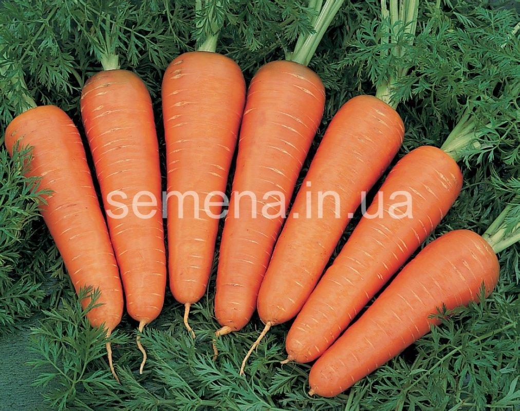 Морковь Канада F1 (1,6-1,8 мм)  100 000 шт