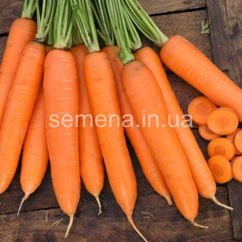 Морковь Сиркана F1  25 000 шт