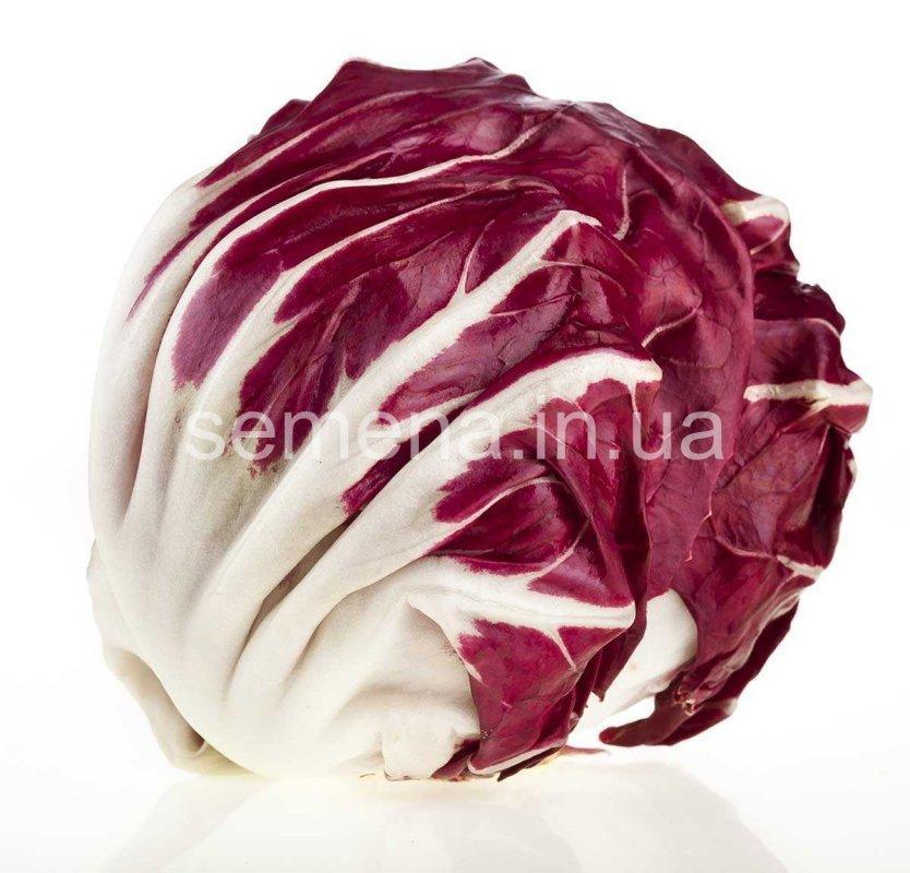 Цикорий салатный Ред Бол  0,5 г