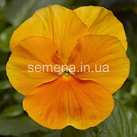 Виола Оранжевое чудо оранжевый 20 шт, фото 1