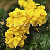 Кроссандра Тропик желтый 4 шт