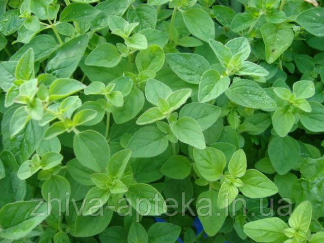 Майоран садовый Majoran hortensis (семена) 100г