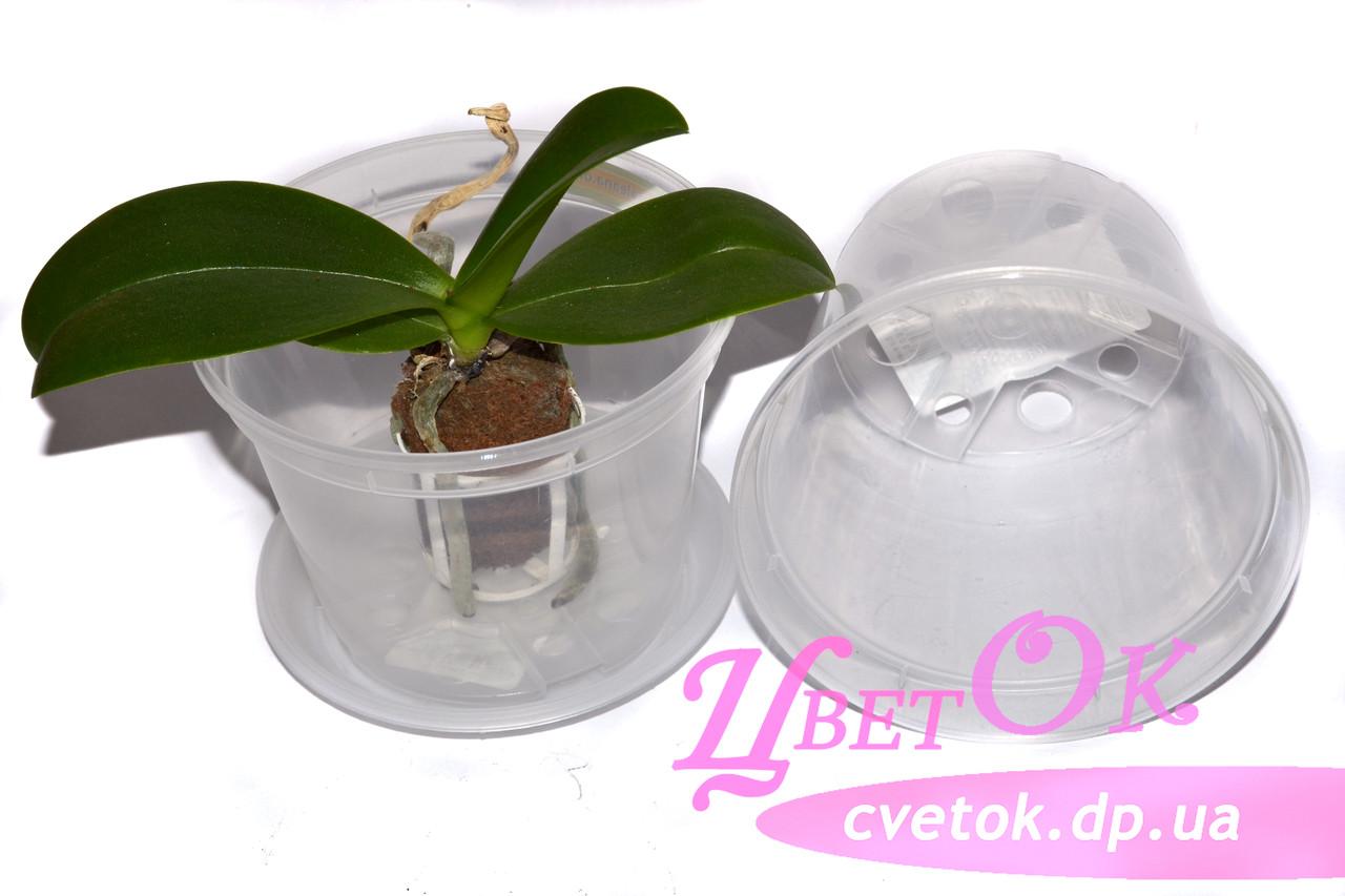 Горшок дренажный без поддона для деток, подростков орхидей, d 11см