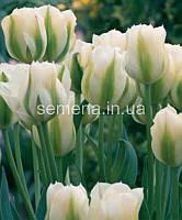 Тюльпан Spring Green  2 шт