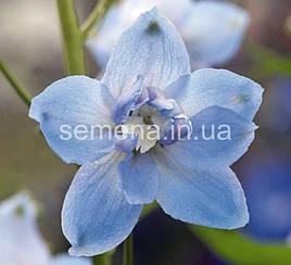 Дельфиниум Магический Фонтан голубой с белым глазком 200 шт
