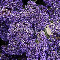 Статица Переса Переса фиолетовый 0,05 г