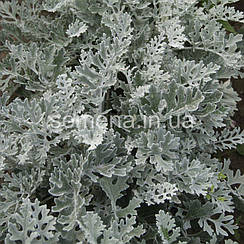 Цинерария Серебряная пыль серебряный 0,1 г