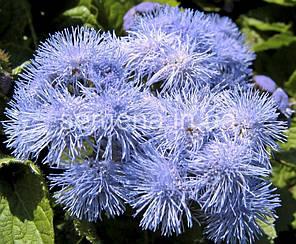 Агератум Голубой мех голубой 0,25 г