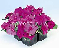 Бальзамин Баланс F1 фиолетовый 100 шт