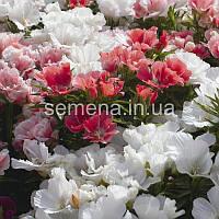 Годеция крупноцветковая Рембрандт смесь 0,2 г