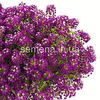 Лобулярия (Алиссум) Пурпурная пурпурный 5 г
