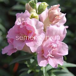 Львиный зев (Антирринум) Твинни F1 розовый 100 шт