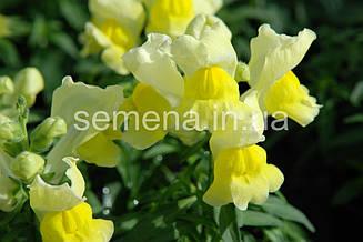 Львиный зев (Антирринум) Снеппи F1 желтый 100 шт
