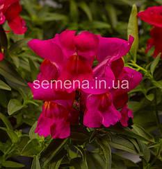 Львиный зев (Антирринум) Монтего F1 розовый 100 шт