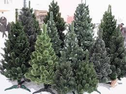 Новогодние елки, ели, сосны