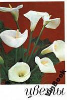 Цветы. Комнатные растения и декоративно-цветущие