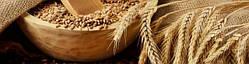 Предложение по семенам озимой пшеницы на сезон 2017-2018 года
