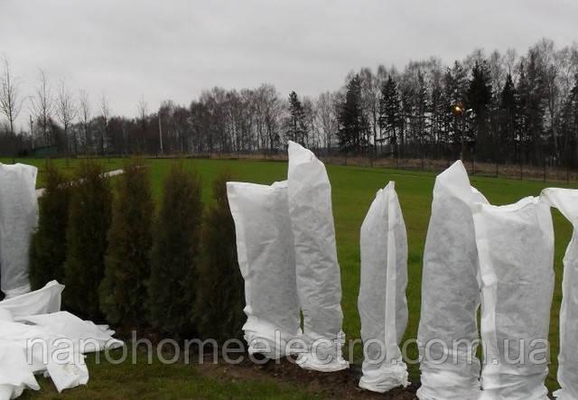 Деревья, обернутые в агроволокно