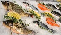 Незаконная рыба: последствия покупки.