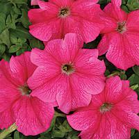 Петуния  крупноцветковая  жемчужно-розовая(семена)