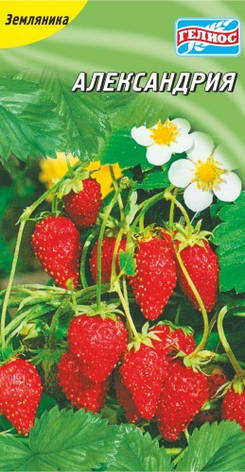 Семена земляники Александрия 100 шт., фото 2