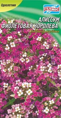 Алиссум Фиолетовая королева 300 шт., фото 2