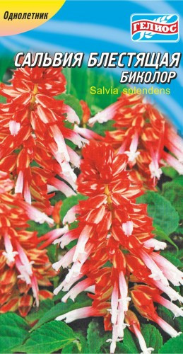 Сальвия блестящая красно-белая Биколор 10 шт.