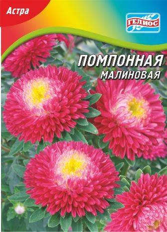 Астра Помпонная малиновая 100 шт., фото 2