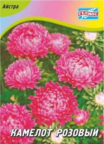 Астра Камелот розовый 100 шт., фото 2