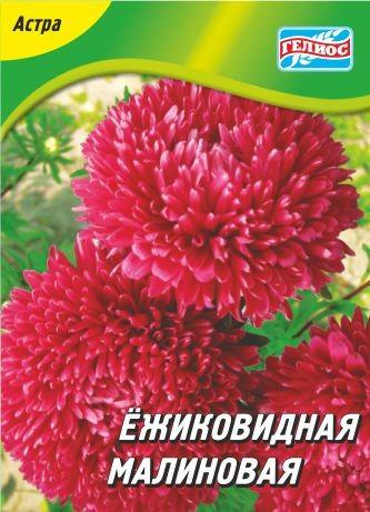 Астра Ежиковидная малиновая 100 шт.