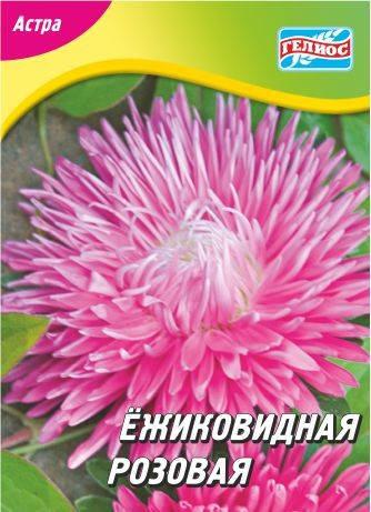 Астра ежиковидная розовая 100 шт., фото 2