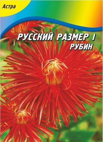 Астра Русский размер I Красная Рубин 70 шт., фото 2