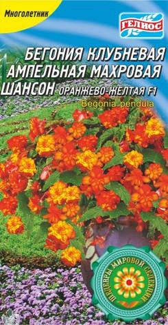 БЕГОНІЯ ШАНСОН ОРАНЖЕВО-ЖОВТА F1, фото 2