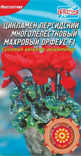 ЦИКЛАМЕН МАХРОВИЙ ОРФЕУС F1 5 драже