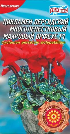 ЦИКЛАМЕН МАХРОВИЙ ОРФЕУС F1 5 драже, фото 2