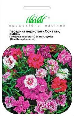 Гвоздика турецкая ПИНОККИО 0,2 г, фото 2