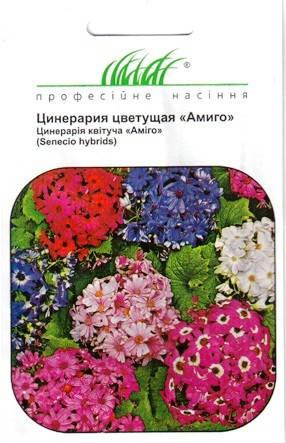 Цинерария Амигоцветущая 10 шт., фото 2