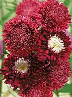 Астра помпонная красная (семена)