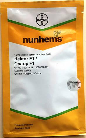 Семена огурцов пчелоопыляемых Гектор F1 1000 шт., фото 2